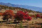 Photo tour in the mountains of Ugam-Chatkal national park at Autumn