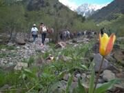Uzbekistan tulips watching hiking to Aksarsay waterfall (23)