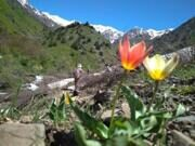 Uzbekistan hiking trekking in Ugam-Chatkal national park to Aksarsay waterfall 1