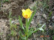 Uzbekistan hiking trekking tulips watching tour in Ugam-Chatkal national park to Paltau waterfall